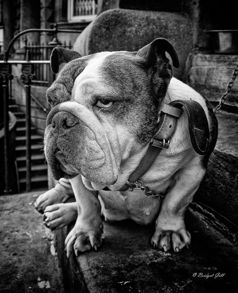 Street Photographs by Bridget Gill 25